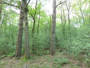 bos met grove den 11